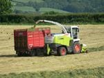 Grass being gathered for silage